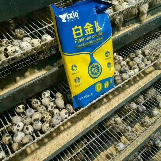 上海市闵行区营养添加剂 蛋禽白金肽 提高产蛋率 延长产蛋高峰