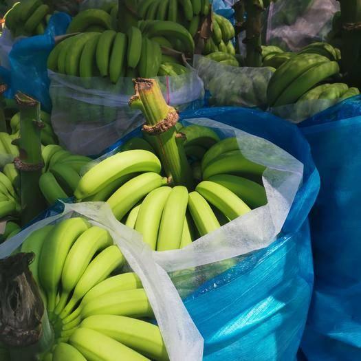 云南省红河哈尼族彝族自治州金平苗族瑶族傣族自治县金平香蕉 有看上的联系