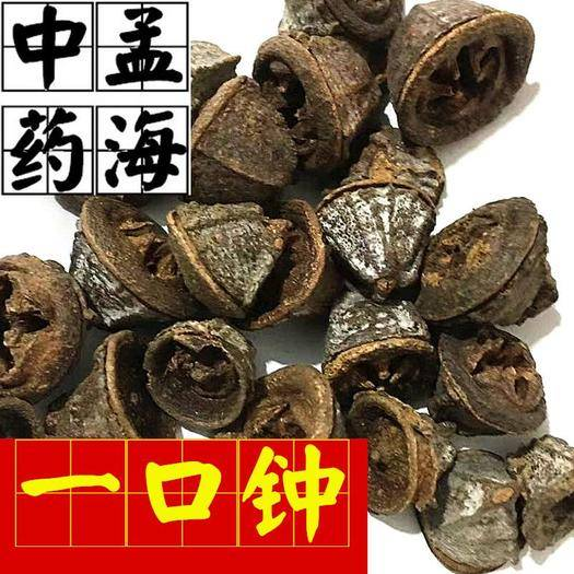 山东省菏泽市鄄城县香料茴香 一口钟 供应大货
