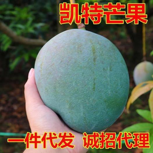 四川省攀枝花市仁和区 新鲜现摘四川攀枝花凯特芒果10斤装一件代发包邮当季时令水果