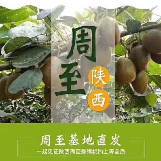 陕西省西安市周至县 周至翠香猕猴桃产地直销,顺丰包邮!只为你吃到更新鲜的猕猴桃