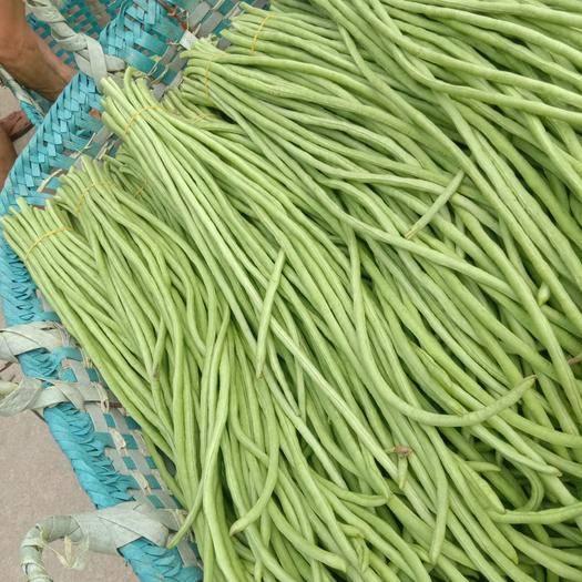 广西壮族自治区钦州市钦南区长豇豆 40cm~70cm
