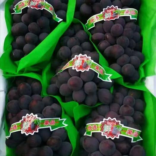 辽宁省锦州市北镇市 北镇巨丰葡萄大掉价了,有口了,赶快来看看吧