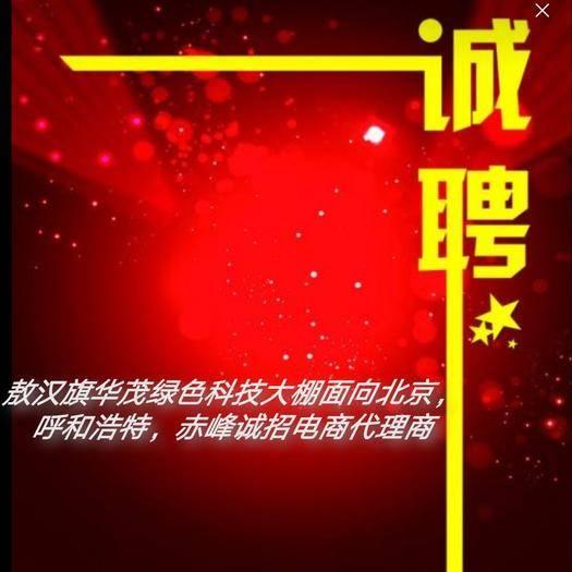 内蒙古自治区赤峰市敖汉旗 华茂1号水果西红柿妇懦皆宜,上好佳品