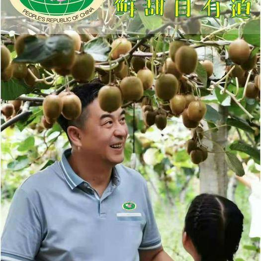 陕西省西安市周至县 选周至猕猴桃,没错