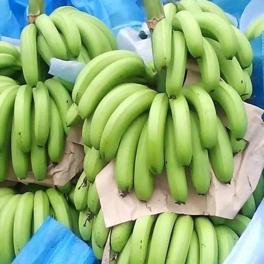 云南省红河哈尼族彝族自治州个旧市 云南低海拔热带香蕉,香甜浓郁