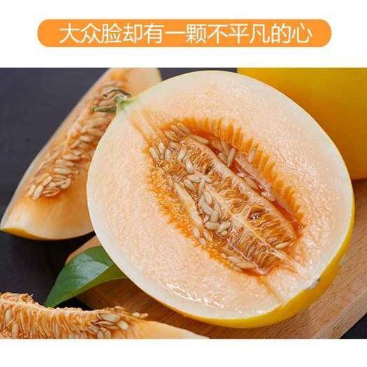 山东省潍坊市寿光市 黄皮沙白甜瓜