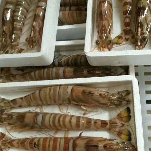 广西壮族自治区来宾市兴宾区深海海鲜 广西星吉海鲜批发