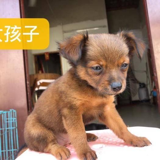 广西壮族自治区北海市合浦县细狗 小体型犬两公两母