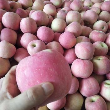 蘋果,紅富士蘋果紙袋,果園直發