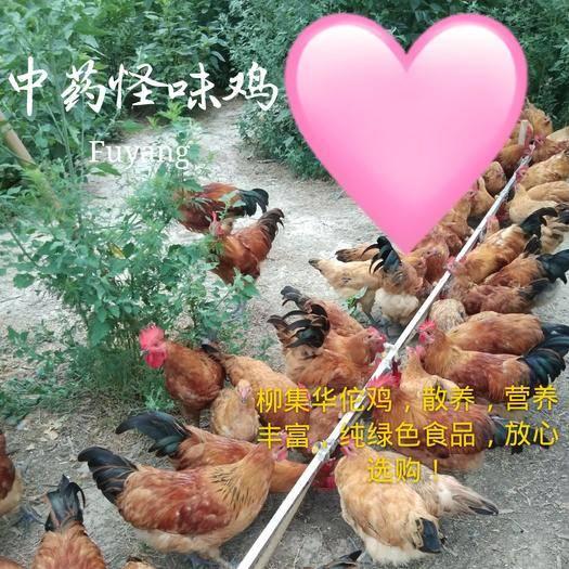 安徽省阜阳市临泉县 柳集华佗鸡(西文中药怪味鸡)