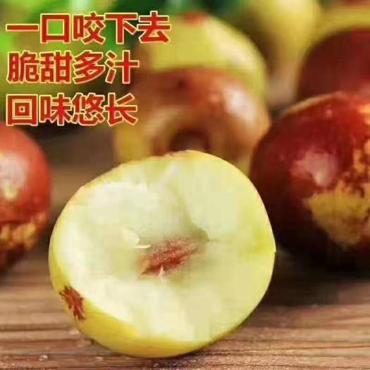 山东省滨州市滨城区 沾化冬枣之乡脆甜冬枣上市