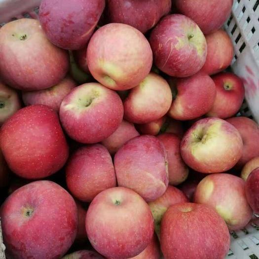四川省凉山彝族自治州盐源县 大凉山盐源生态丑苹果