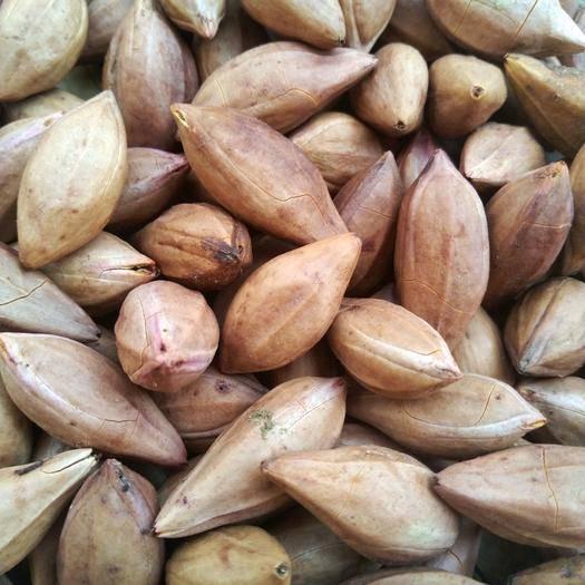 广西壮族自治区百色市右江区 黑橄榄核 大量供应
