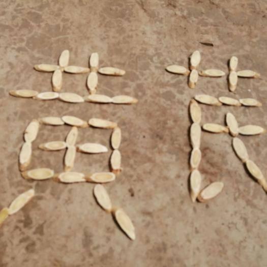 甘肃省定西市岷县 高质量黄芪片1.0-1.2     500g包邮到家