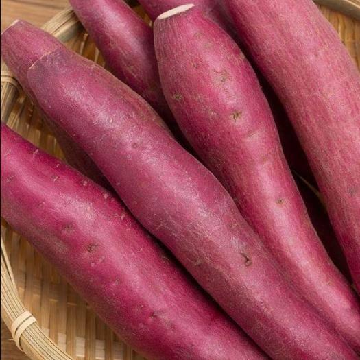 河北省保定市易县济薯25号红薯 济薯25