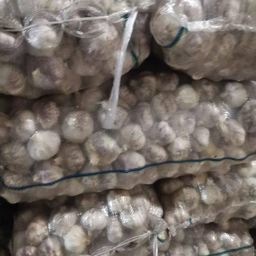 江西省赣州市章贡区紫皮大蒜 大量有货,产地直销,量大从优