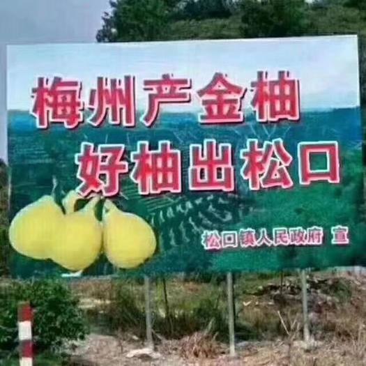 广东省梅州市梅县区梅州蜜柚 梅州红心蜜柚,5元一斤,50斤起包邮!