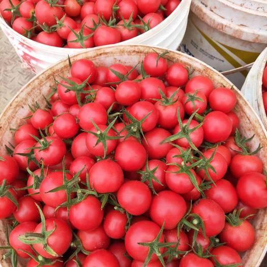 山东省潍坊市寿光市粉贝贝小樱桃柿 寿光特菜贝贝小柿子大量上市,需要的联系,支持一件代发