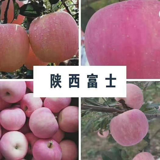 陕西省咸阳市长武县红富士苹果 陕西红富士,香甜可口,肉质脆嫩,色泽好看!