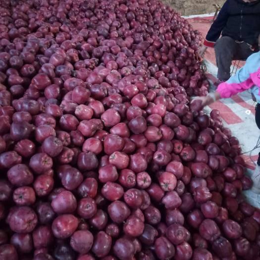 甘肃省天水市秦安县花牛苹果 自家自产自稍,口干香甜。一箱包邮