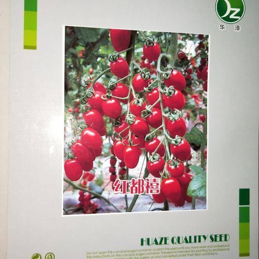 山东省潍坊市寿光市樱桃番茄种子 寿光华泽种业,红都禧樱桃番茄