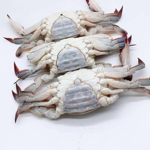 江苏省苏州市太仓市冻梭子蟹 母蟹野生梭子蟹母蟹个大有黄新捕活冻10斤21只左右