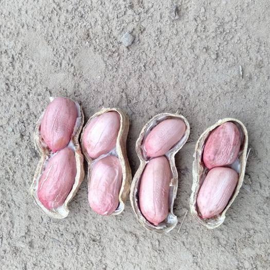 河南省商丘市宁陵县带壳花生 寻求合作