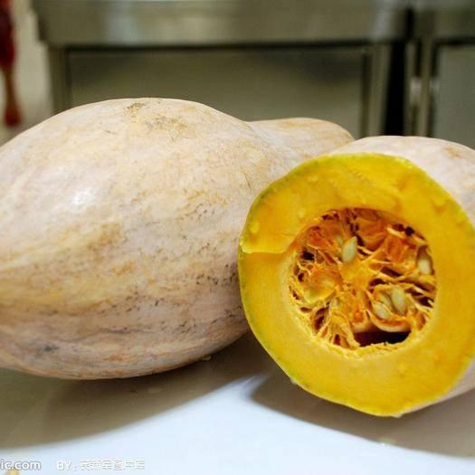 河南省南阳市邓州市 求收购,本人有大量农副产品,土豆红薯南瓜50000斤