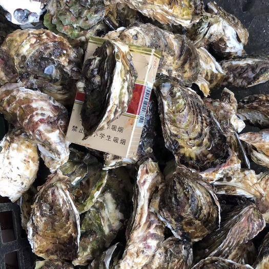 广东省潮州市饶平县 汫洲野生大生蚝 牡蛎 产地直销