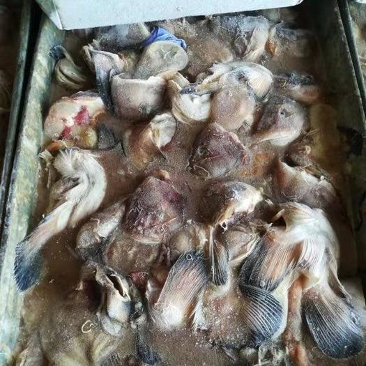 山东省威海市环翠区冷冻海鱼 海兔鱼头  先生鱼头  饲料鱼 饵料鱼 冻块