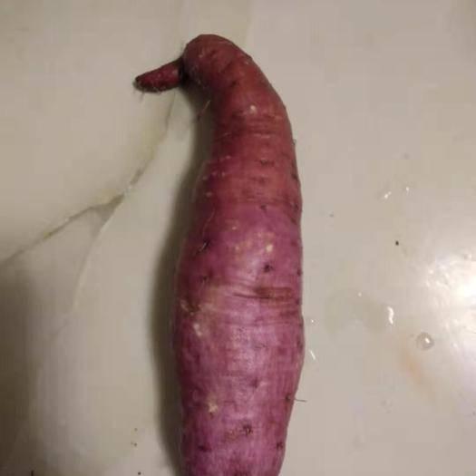 湖南省怀化市通道侗族自治县一点红红薯 混装通货 紫皮