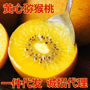 新鮮現摘四川蒲江黃心獼猴桃奇異果多規格一件代發包郵