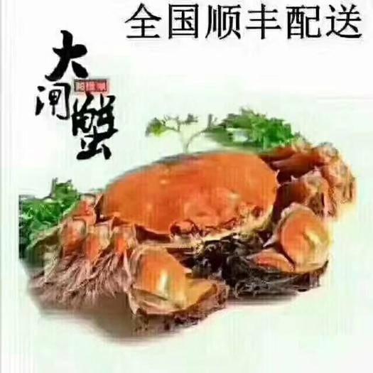 江苏省泰州市兴化市 38硬规格兴化大闸蟹,先款后货,订单为主