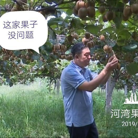 陕西省西安市周至县 周至徐香猕猴桃产地直销,顺丰包邮!只为您吃到更新鲜的猕猴桃