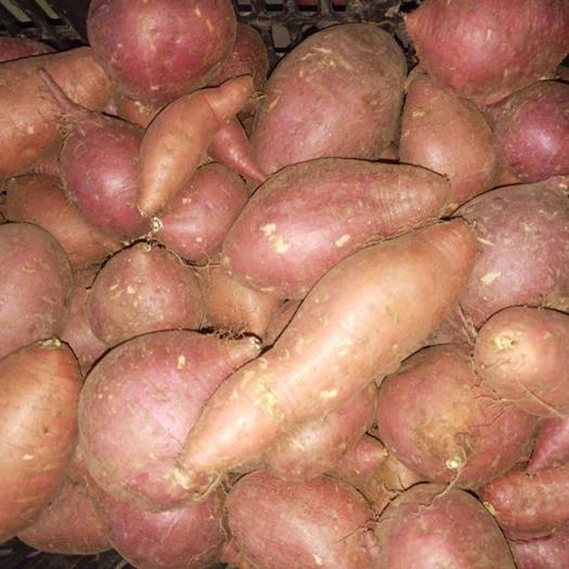 山东省泰安市新泰市水果红薯 西瓜红