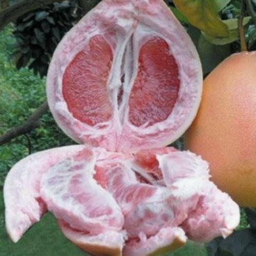 福建省龙岩市永定区红肉蜜柚 自家种的三红柚,需要联系