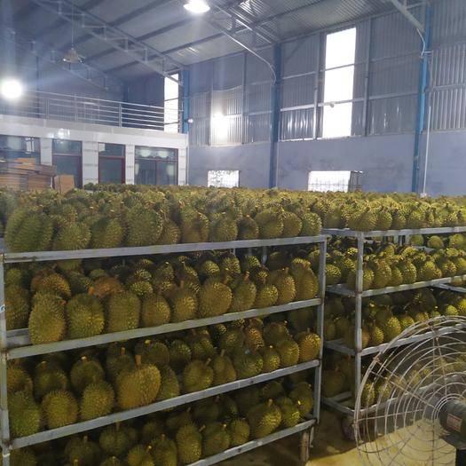 广西壮族自治区崇左市凭祥市猫山王榴莲 产地拿货,价格优美,新鲜的一级果,果型好,质量放心