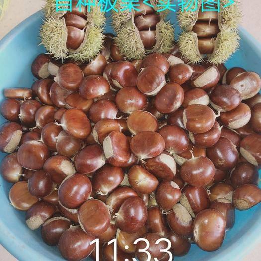 河北省唐山市遵化市遵化板栗 把最美品质栗子分享给大家!农户对接炒栗店,坏栗包赔。