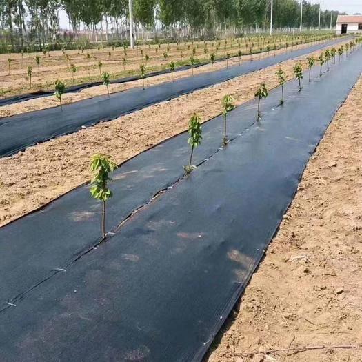 山东省德州市陵城区除草地膜 高品质,高质量,轻轻松松解决除草问题,一次铺设多年无忧,