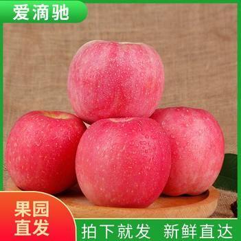 紅富士陜西特級蘋果新鮮直達現摘現發孕婦兒童10斤包郵一件代發