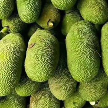 海南菠萝蜜 诚信经营,质量保证,谢绝还价