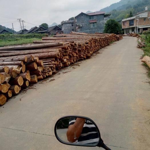广西壮族自治区柳州市三江侗族自治县杉木