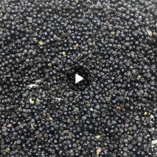 河南省安陽市林州市射干種子 優質射干種出售
