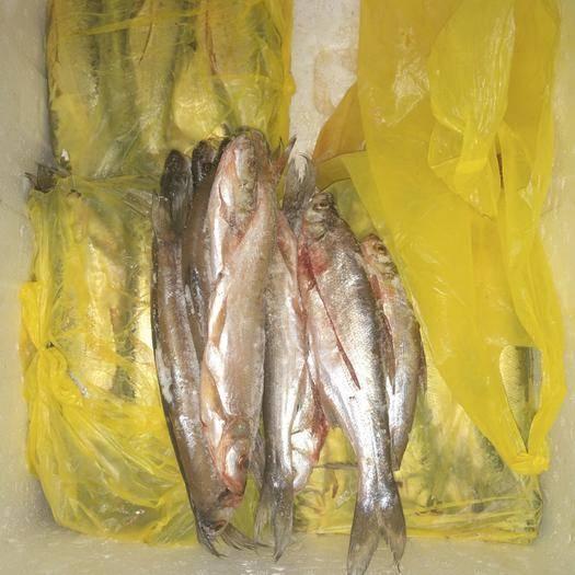 贵州省贵阳市云岩区翘嘴鲌鱼 野生 0.5公斤以下