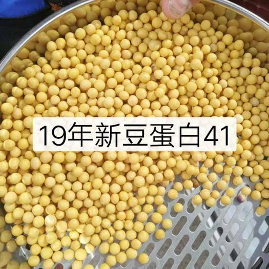 内蒙古自治区呼伦贝尔市鄂伦春自治旗 19大豆蛋白高,品质好,有需要的抓紧联系