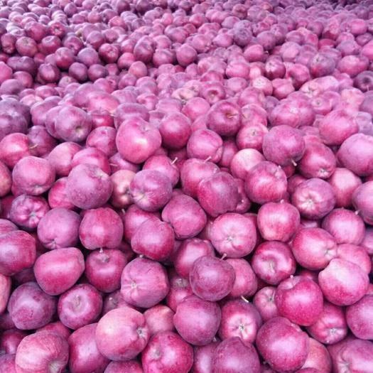 湖北省恩施土家族苗族自治州恩施市花牛蘋果 新鮮下樹的花牛