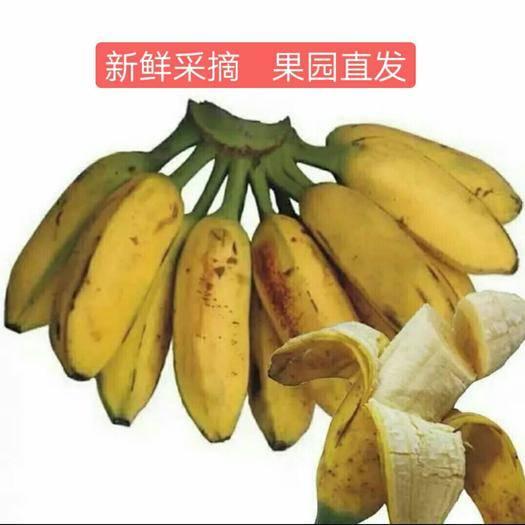 广西壮族自治区南宁市西乡塘区 牛蕉非小米蕉红皮蕉苹果蕉香蕉粉蕉