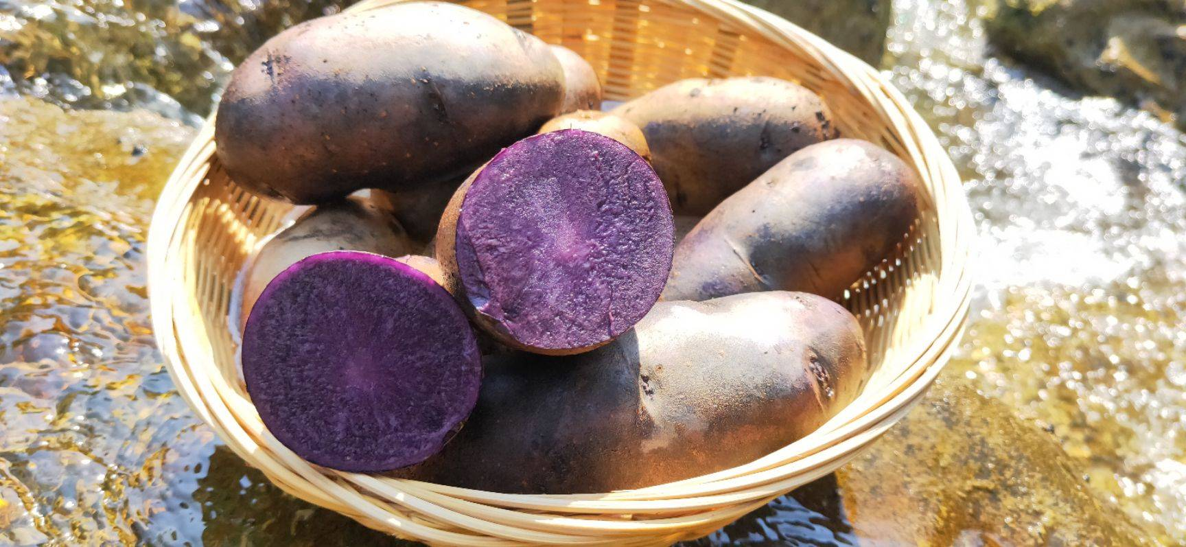 黑金剛土豆 花青素,抗突變,抗氧化