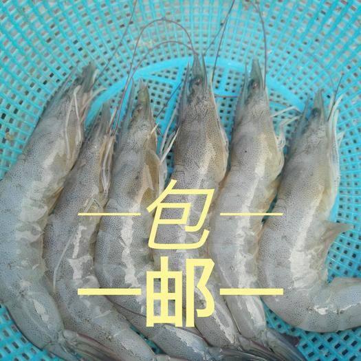 福建省漳州市诏安县 对虾 白虾 剑虾 龙虾 小龙虾 白虾咸水养殖
